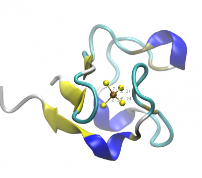Representation of rubredoxin's secondary structure and active site generated by VMD.